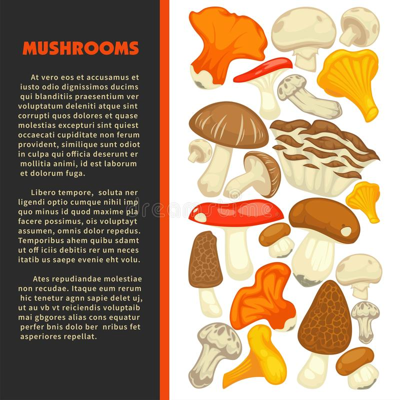 Ripe forest mushrooms of all edible species on promotional poster with sample text stock illustration