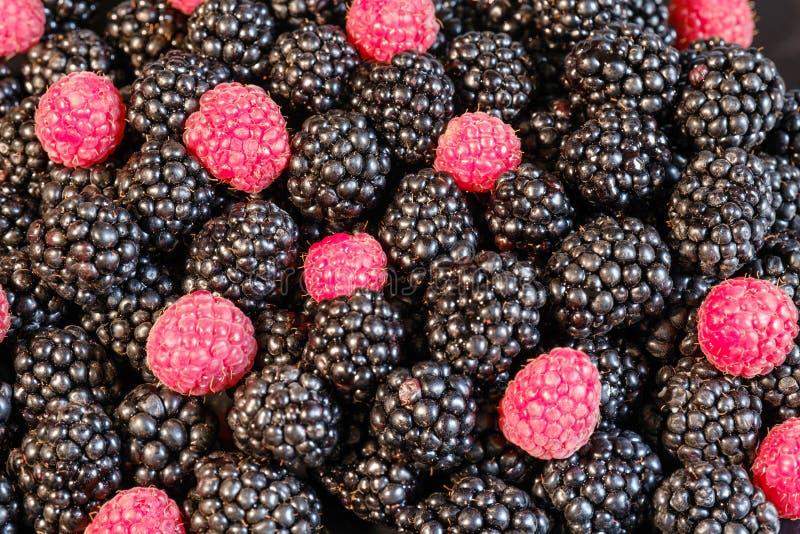 Ripe and fresh blackberry and raspberries, sweet red raspberries over blackberry, berries food royalty free stock photos