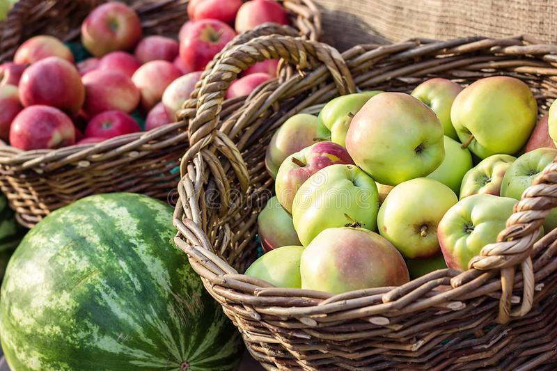 Ripe fresh green and red organic apples in basket on the market. Harvest time. Fresh fruits shopping at the local outdoor farmers royalty free stock image