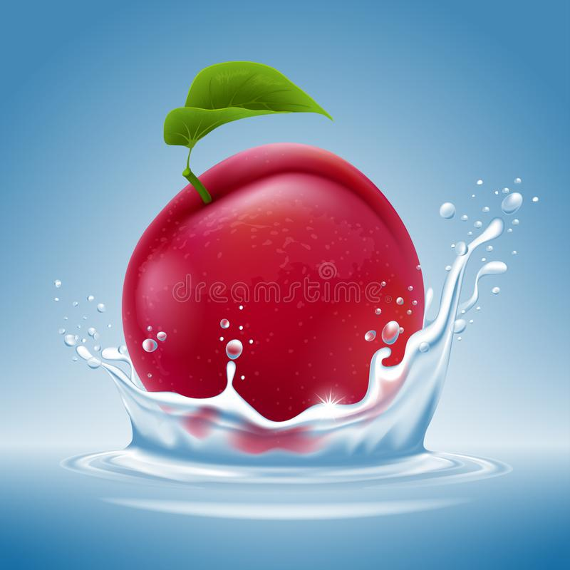 Plum fruit in water splash. Ripe fresh plum fruit falls into the water with splashes on a blue background. Vector illustration royalty free illustration