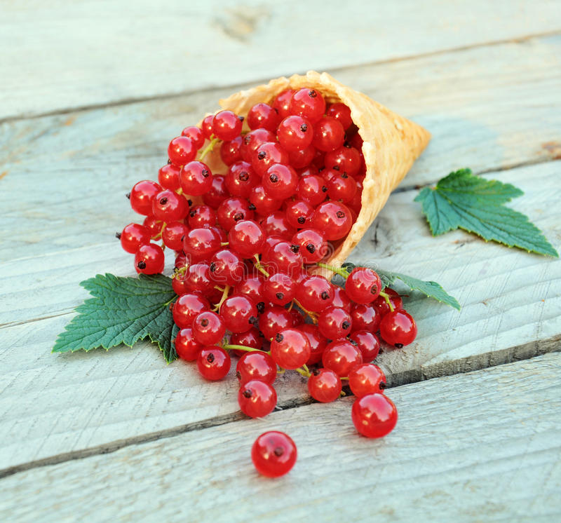 Ripe fresh red currants in ice cream waffle cone on rustic wooden background. Dietary and healthy dessert. royalty free stock images