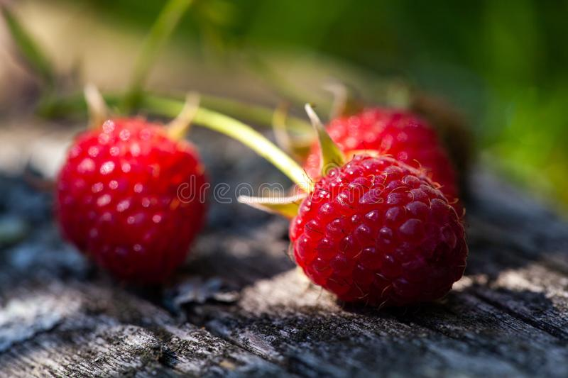 Ripe, freshly picked raspberries, on rustic wooden old surface. Selective focus royalty free stock photo