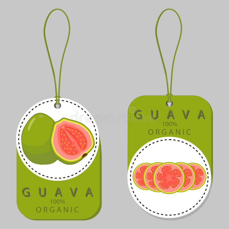 Ripe fruit red guava. Vector illustration logo for whole ripe fruit red guava,cut half sliced amrood,background.Guava drawing consisting of tag label,natural vector illustration