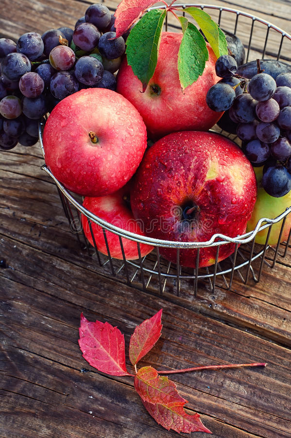 Ripe fruits in the iron basket. Basket of metal rods with ripe apples and grapes stock photography