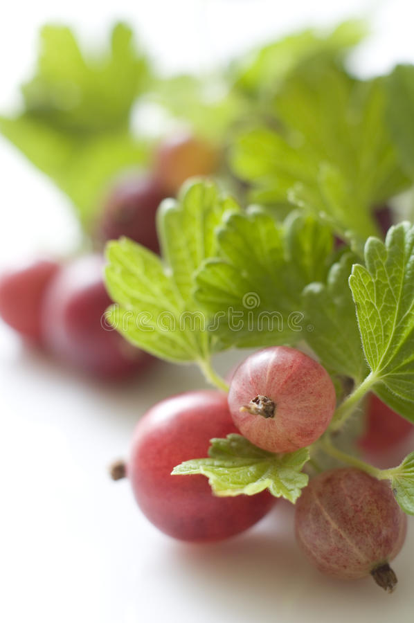 Ripe Gooseberries Stock Images