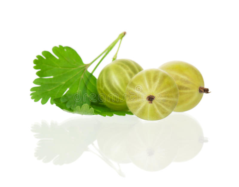 Ripe gooseberries. Ripe fresh gooseberries with leaves isolated on white background royalty free stock images