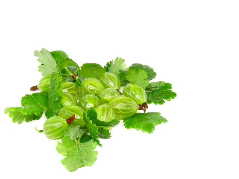 Download Ripe Gooseberry With Leaf On White. Stock Photo - Image: 22891788
