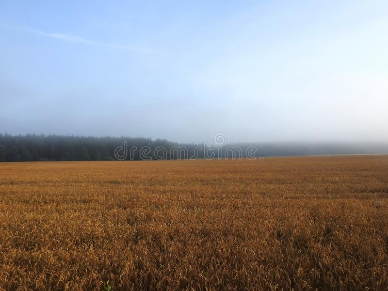 Trees and field in early morning, Lithuania stock image