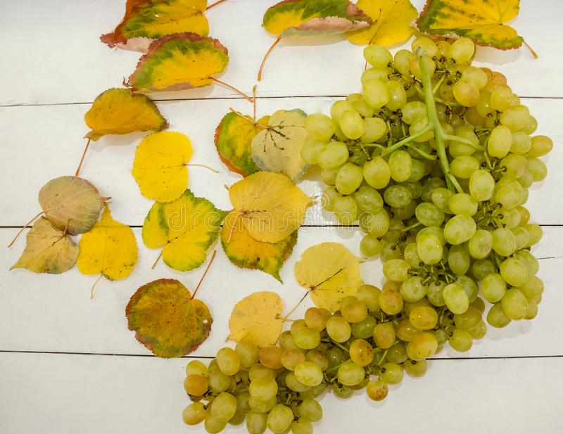 Ripe grapes and yellow leaves on a white table. View from above. Autumn concept. stock photos