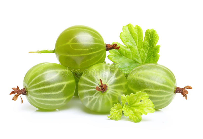 Ripe green gooseberry with leaf isolated royalty free stock image