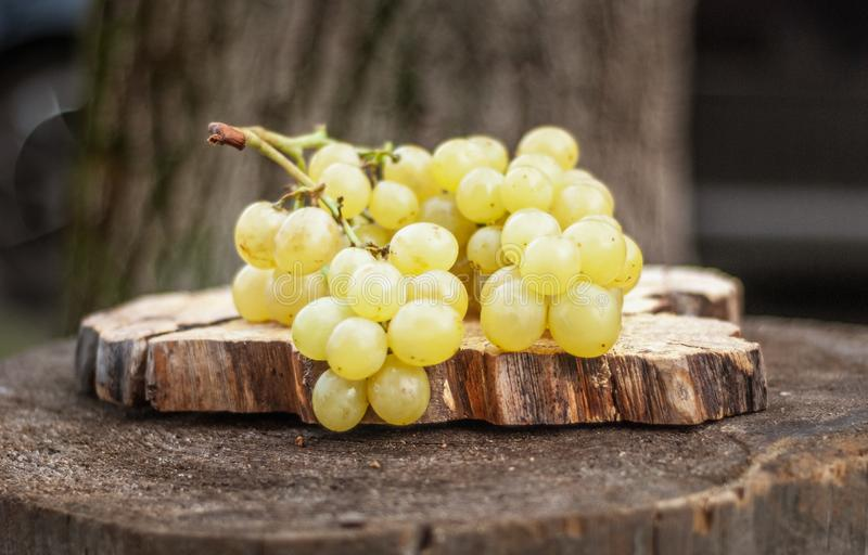 Ripe Green Grapes on an Old Tree Stump. Shallow depth of field stock images