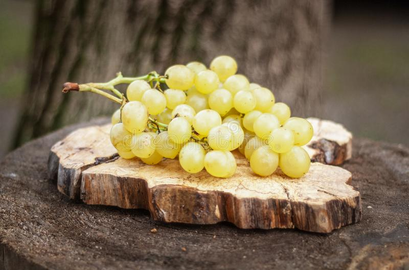 Ripe Green Grapes on an Old Tree Stump. Shallow depth of field stock photography