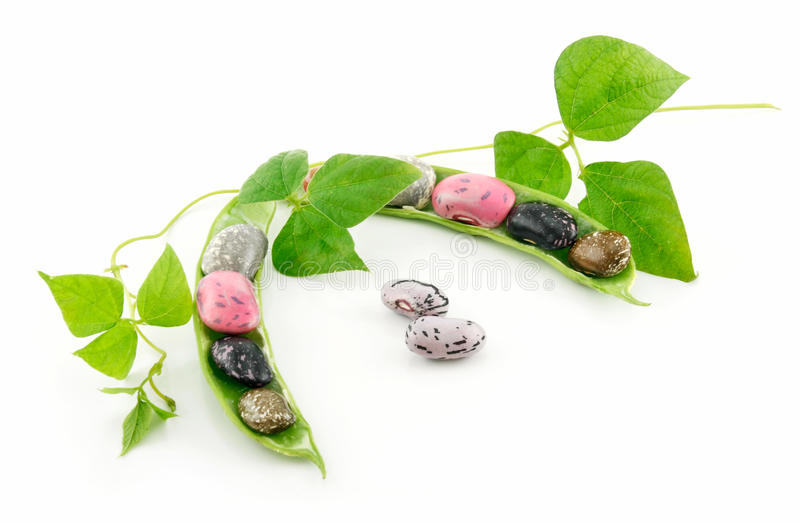 Ripe Haricot Beans with Seed and Leaves Isolated