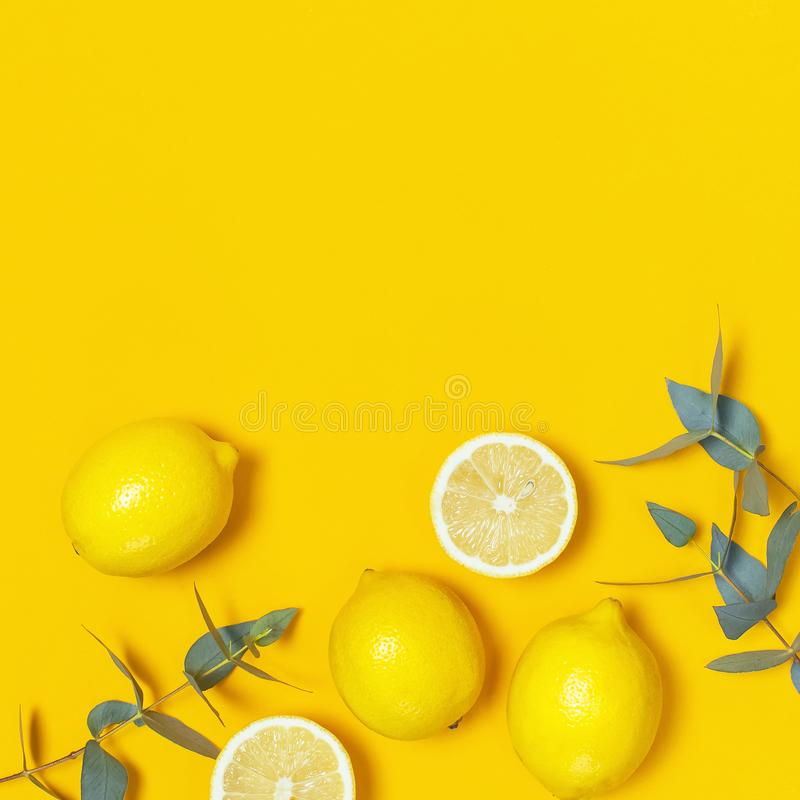 Ripe juicy lemons and green eucalyptus twigs on bright yellow background. Lemon fruit, citrus minimal concept. Creative summer. Food minimalistic background stock image