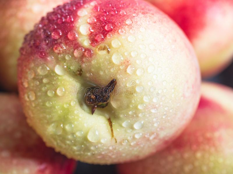 Ripe juicy nectarine close-up with red sideways. Ripe juicy nectarine close-up washed in drops of water stock images