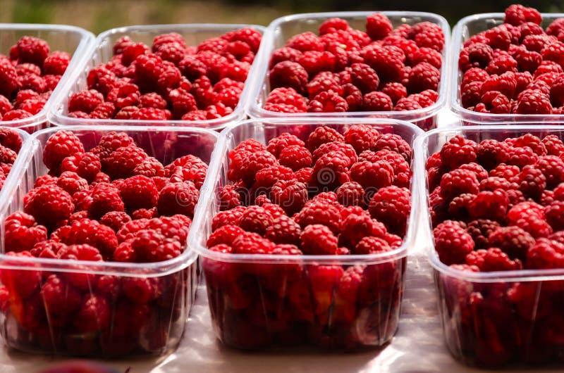 Ripe juicy raspberries in plastic containers on market stall. Fresh organic berries from ecofarm stock photo