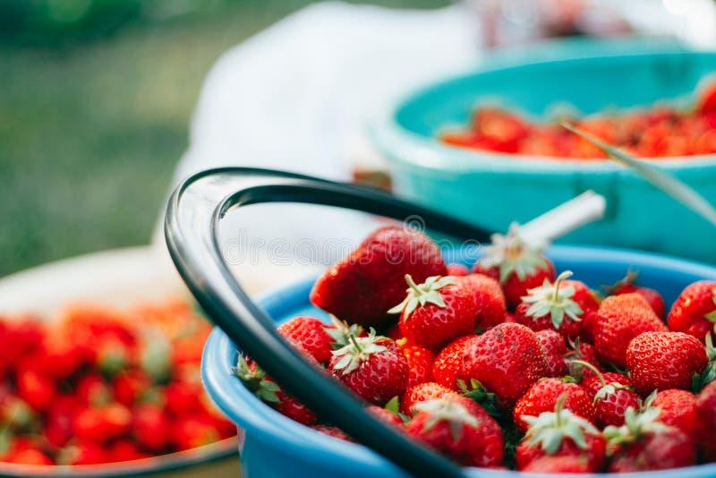 Ripe juicy strawberries. Ripe juicy strawberries in buckets stock photo