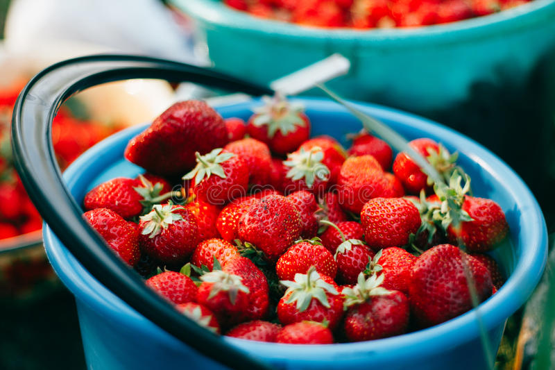 Ripe juicy strawberries in buckets. Ripe juicy strawberries in blue buckets stock photo