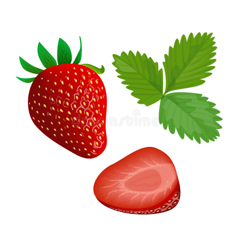 Ripe juicy Strawberry with leaf isolated on white. Whole and slice vector illustration