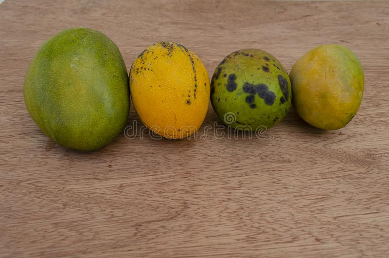 Ripe Juley, Connon, Robin, And Greenskin Mangoes royalty free stock photography