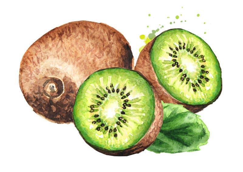 Ripe kiwi fruit with leaf. Watercolor hand drawn illustration isolated on white background stock illustration