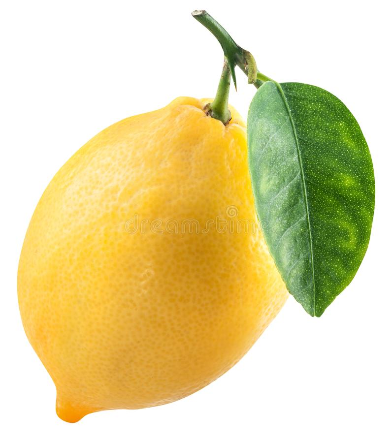 Ripe lemon fruit with lemon leaf. File contains clipping path. Ripe lemon fruit with lemon leaf on white background. File contains clipping path royalty free stock photography