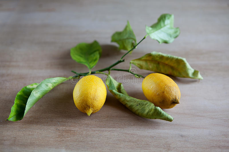 Download Ripe Lemons On A Leafy Twig Stock Images - Image: 24873384