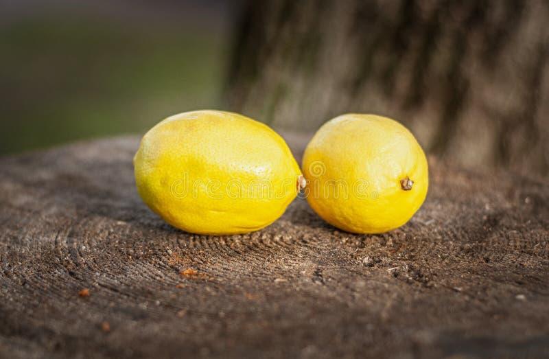 Ripe Lemons on an Old Tree Stump. Shallow depth of field stock image