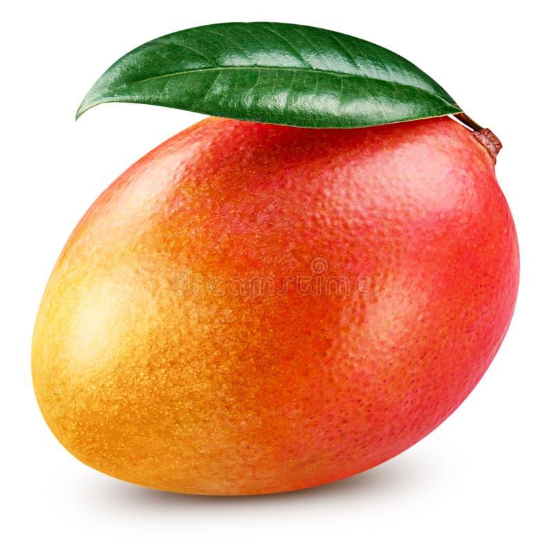 Ripe mango isolated stock photography