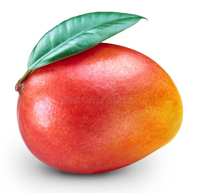 Ripe mango isolated royalty free stock image