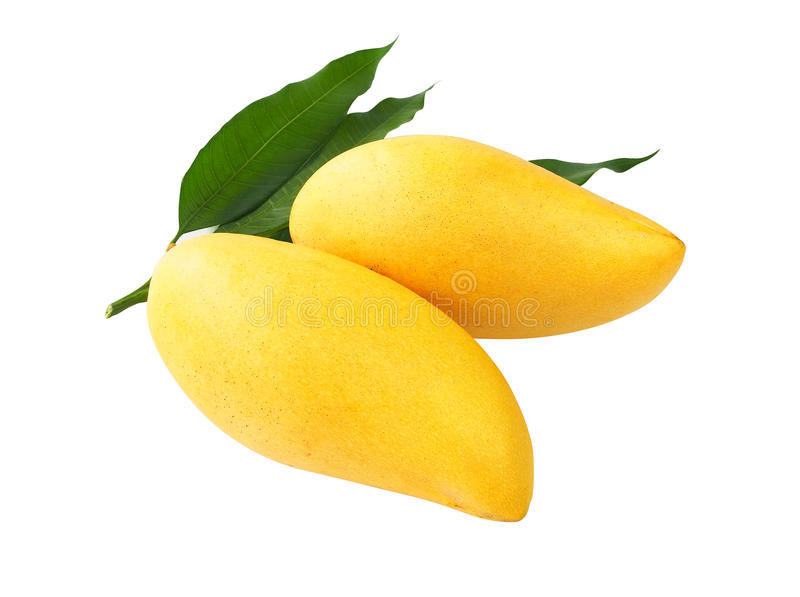 Ripe mango isolated on white with clipping path. stock photo