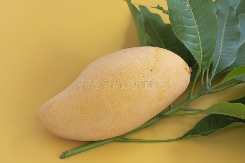 Ripe mango on yellosw background stock image