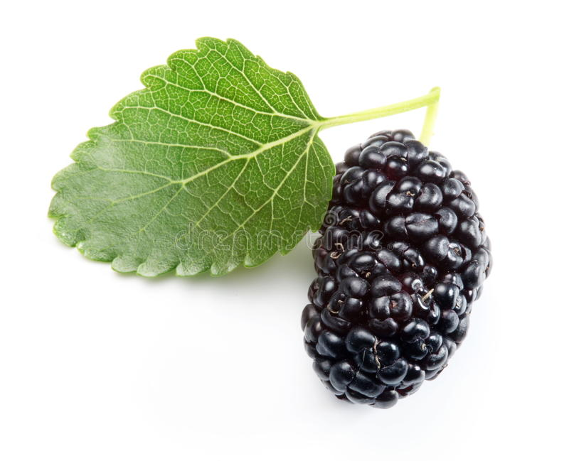 Ripe mulberry. stock photography