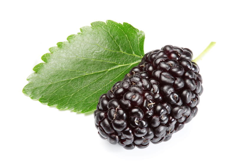 Ripe mulberry. royalty free stock photography