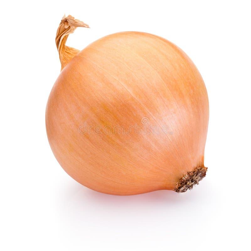 Ripe onion isolated on white background. Ripe onion isolated on a white background royalty free stock photo
