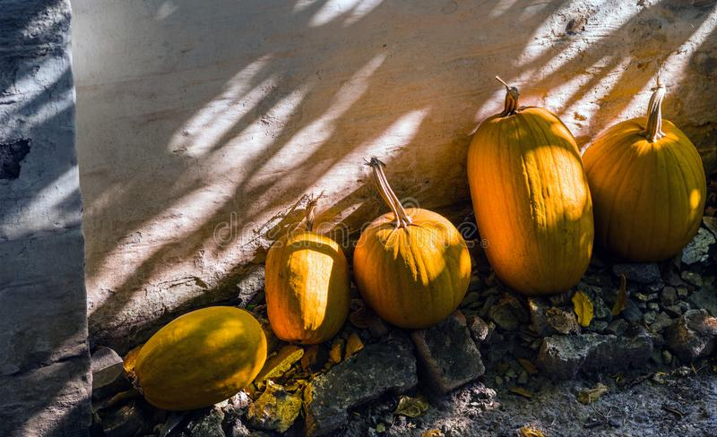 Ripe orange and yellow pumpkins lie against a painted brick wall.  royalty free stock photography
