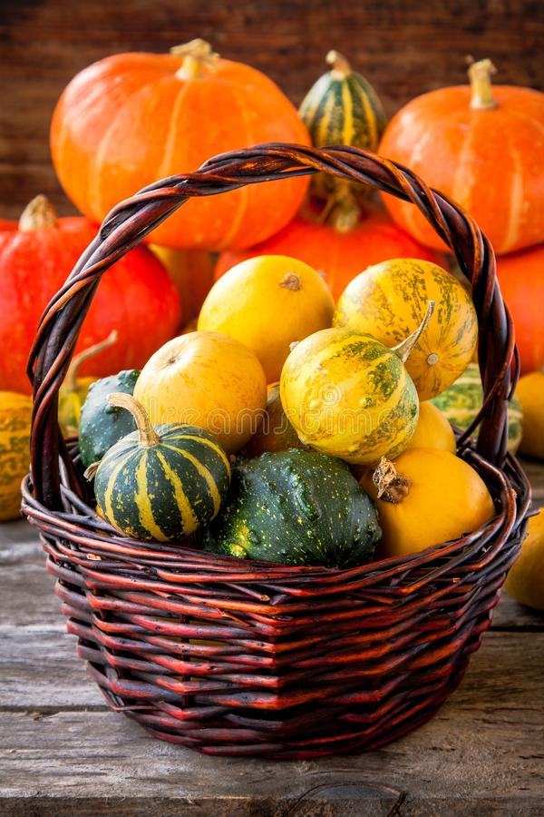 Free Ripe Organic Colored Pumpkins In The Basket Royalty Free Stock Images - 44948419