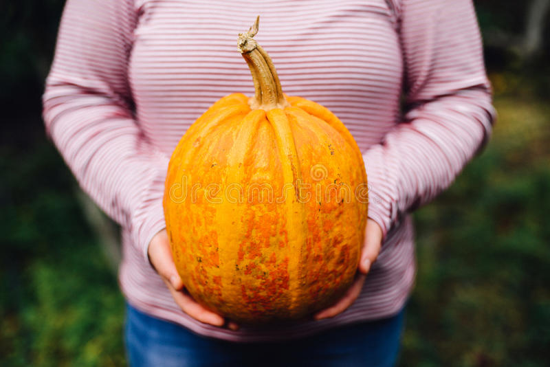 Download Ripe, Organic, Orange Pumpkin In The Hands. Sunny Fall Day. A Yo Stock Image - Image of decorate, delicious: 79689707