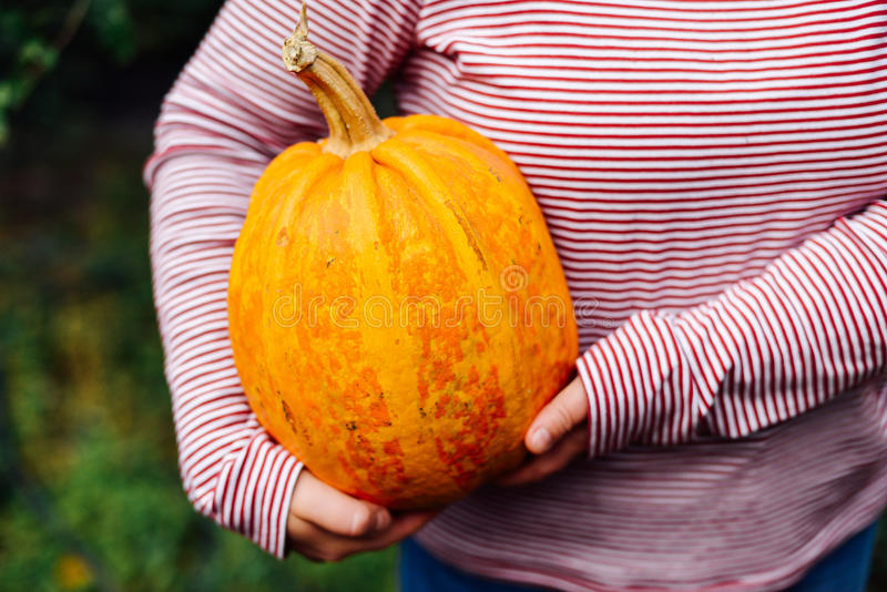 Download Ripe, Organic, Orange Pumpkin In The Hands. Sunny Fall Day. A Yo Stock Photo - Image of market, onion: 79690616