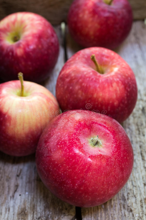 Ripe Paula Red Apples royalty free stock image