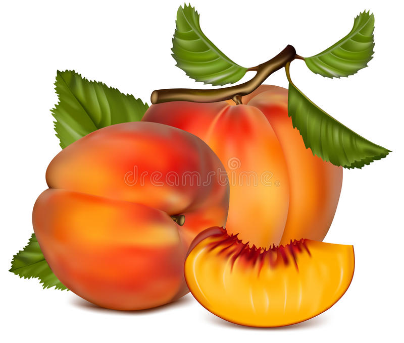 Download Ripe Peach Fruit With Green Leaves. Stock Vector - Image: 14052212