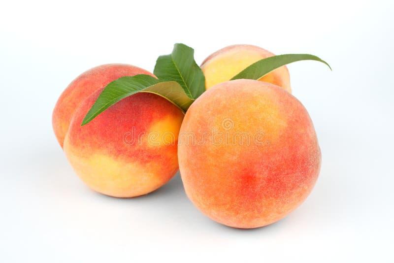 Download Ripe peach fruits stock photo. Image of vegetarian, green - 26091230