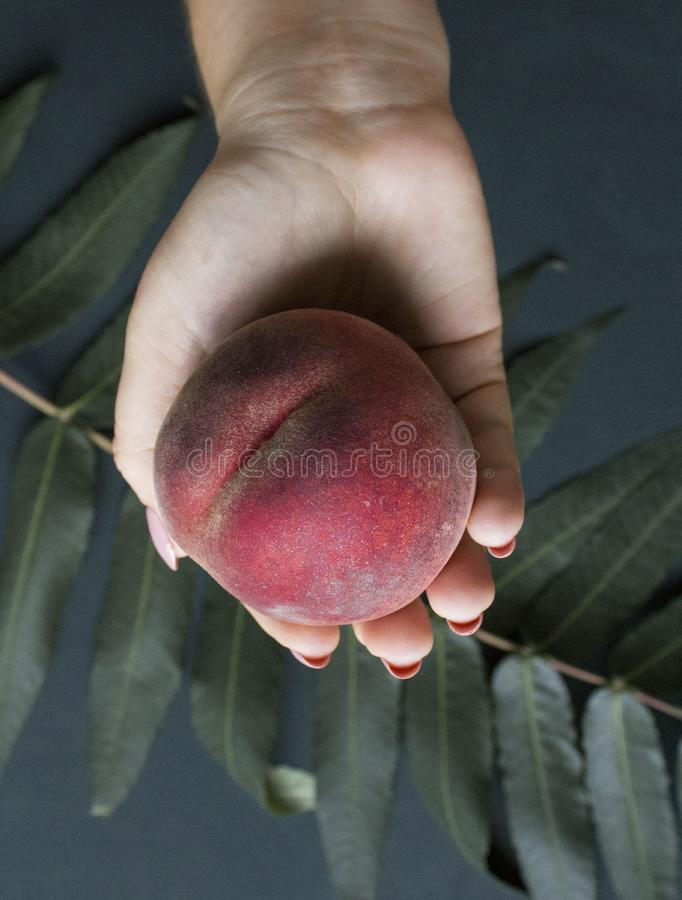 Ripe peach in the girls hand on a dark green background. Organic juicy peach in hand royalty free stock photo