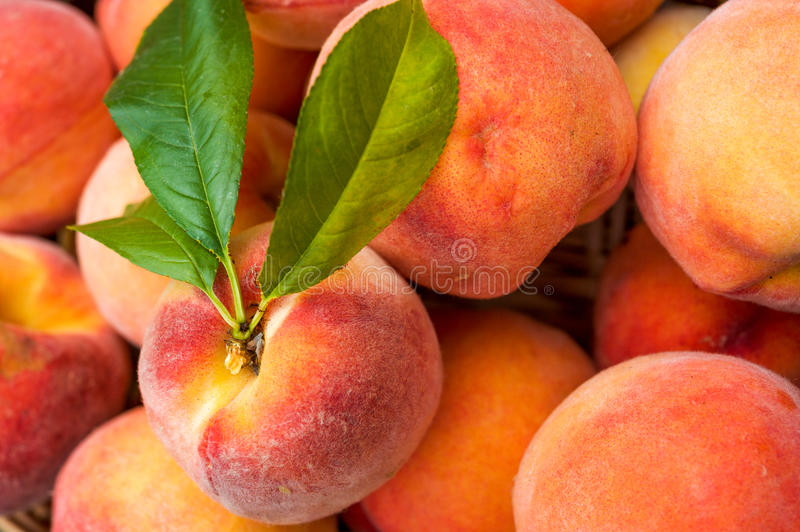 Ripe peaches. Close up of a basket of ripe organic fresh peaches royalty free stock photography