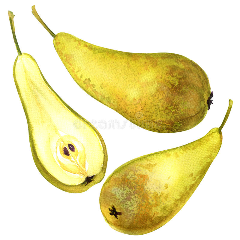 Ripe pear isolated on white background vector illustration