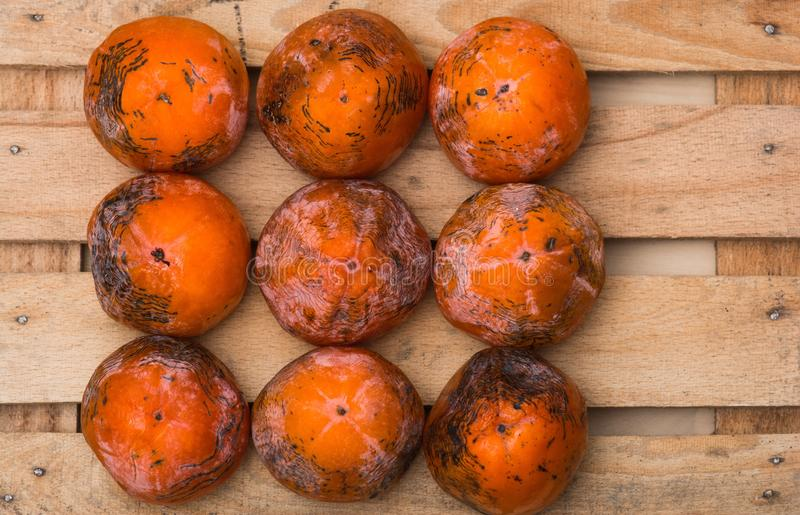 Persimmon. The frozen persimmon of a winter crop royalty free stock images