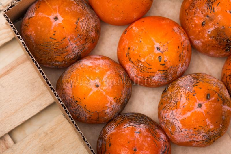 Persimmon. The frozen persimmon of a winter crop royalty free stock photography