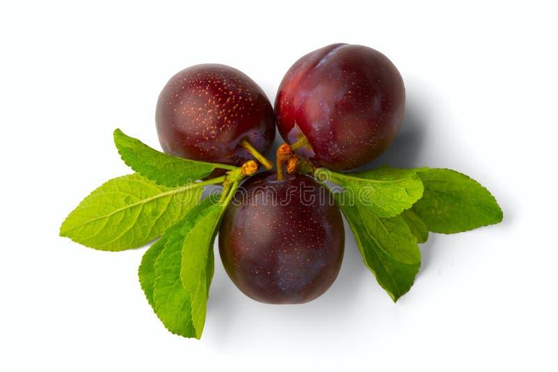 Download Ripe plum stock image. Image of green, fruit, plum, violet - 22455831