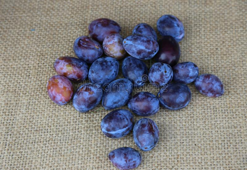 Ripe plums. On a hemp patch stock images