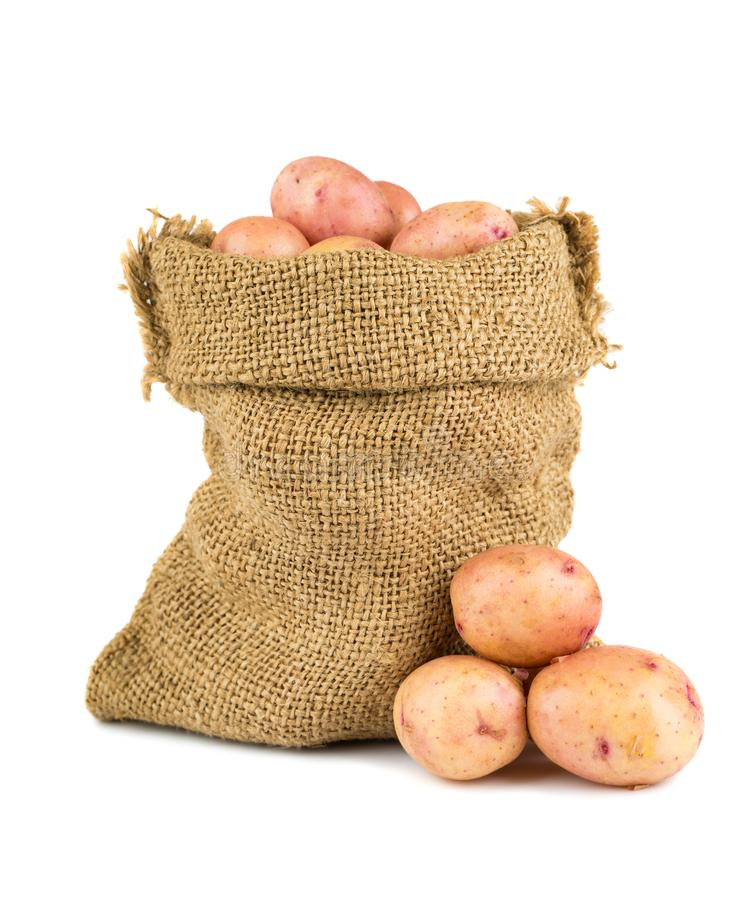 Ripe potatoes in burlap sack royalty free stock images